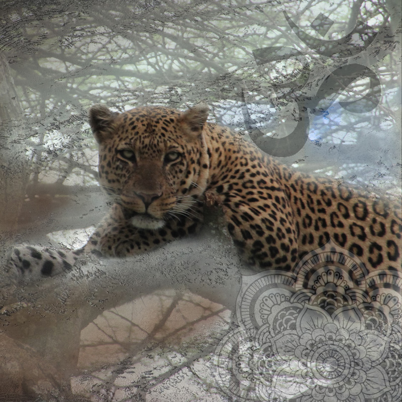 Spotted Leopard resting in a tree branch stars in this photo collage with hints of Asian artworks.