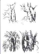 A page from On Drawing Trees and Nature by JD Harding.