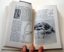 A page from The Artistic Anatomy of Trees by Rex Vicat Cole